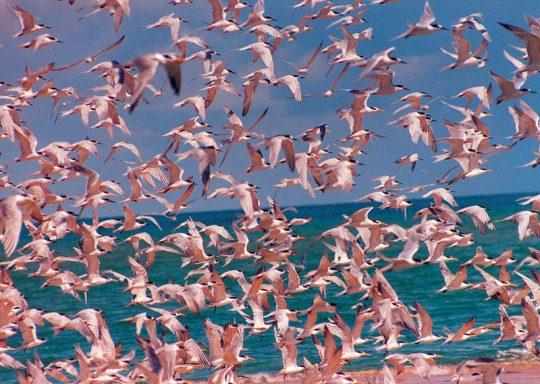 Можно ли почувствовать красоту природы фото - 49 540x384