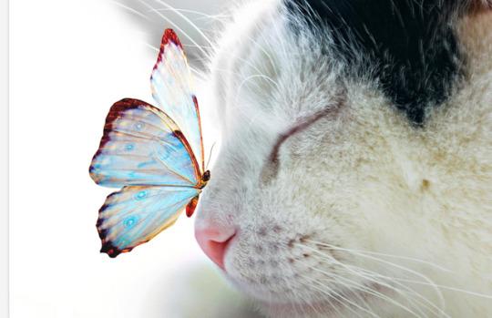 Можно ли почувствовать красоту природы