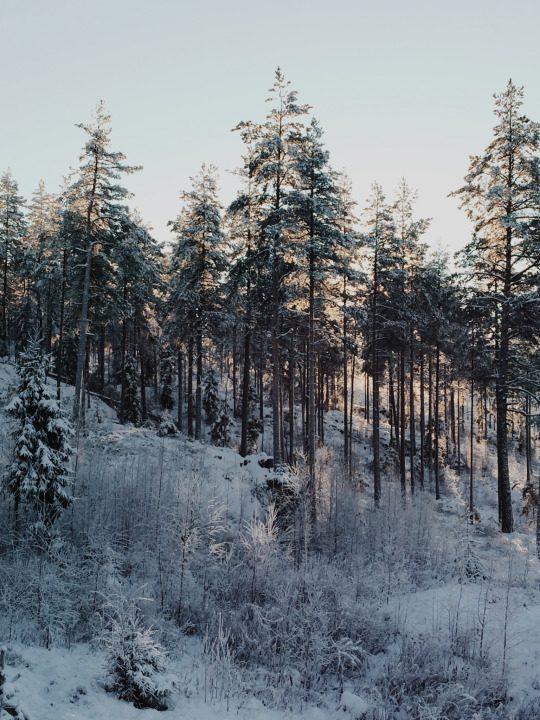 В тумане будних дней фото - 97 540x720