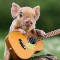 Патологоанатомические изменения при чуме свиней фото - 13483 200x200
