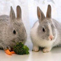 28438 Где купить комбикорм для кроликов