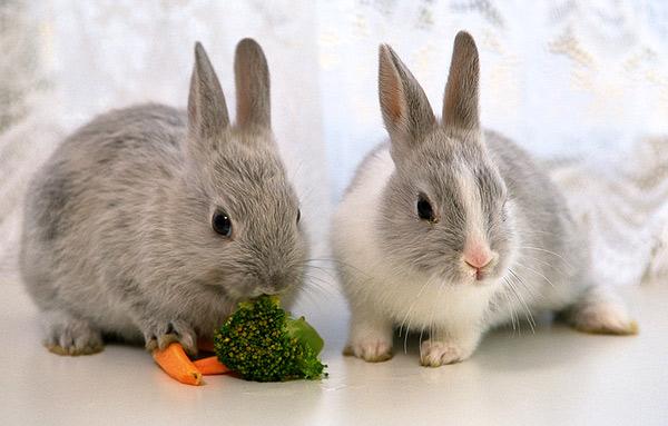 Где купить комбикорм для кроликов