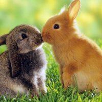 28442 Отопление шедов для кроликов