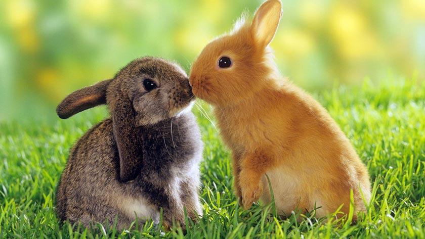 Отопление шедов для кроликов