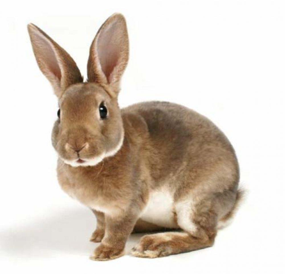 Освещение шедов для кроликов