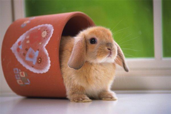 Оборудование шедов для кроликов