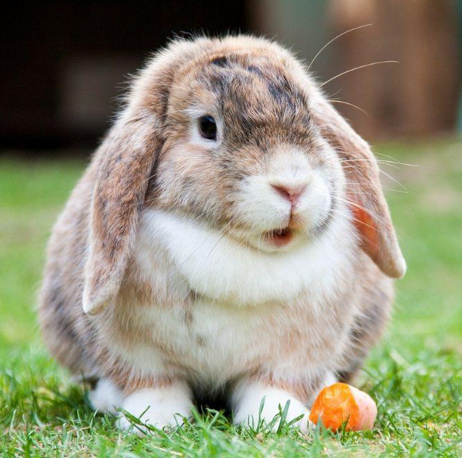 Шеды для кроликов