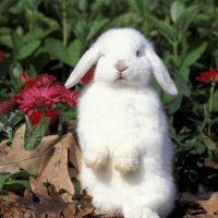 28454 Навозоудаление и вентиляция на кролиководческих ферма