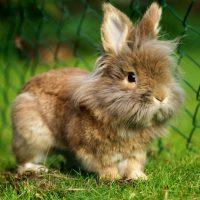 28457 Клетки для кроликов, фермы для кроликов