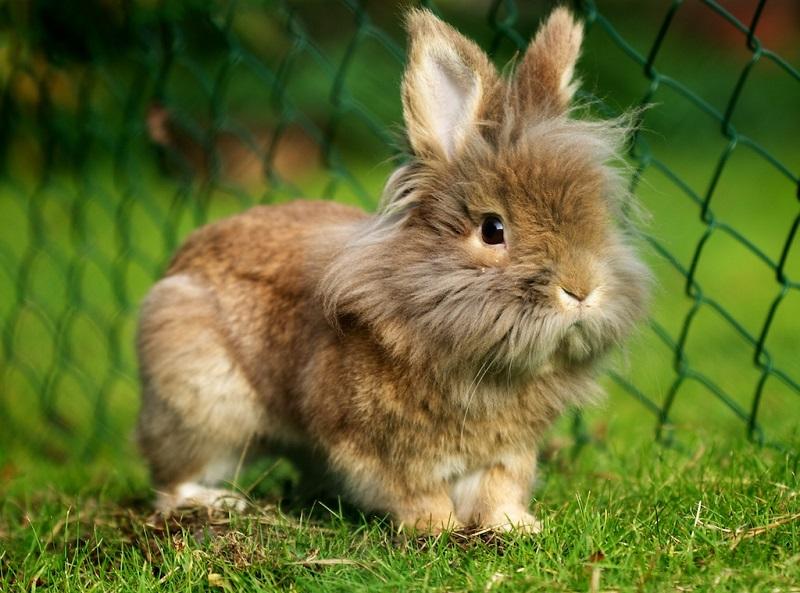 Клетки для кроликов, фермы для кроликов