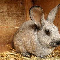 Чертеж клетки для кроликов фото - 14098 200x200