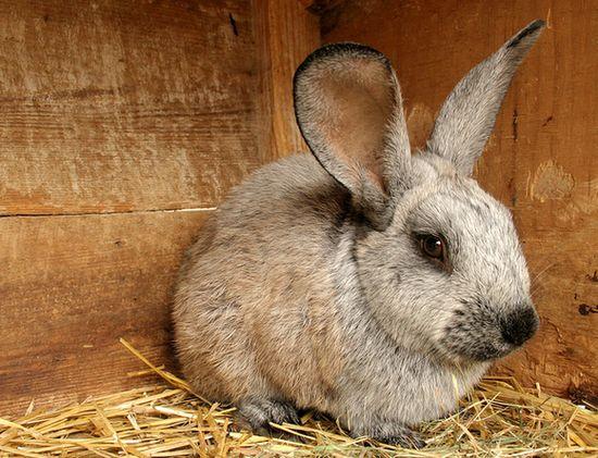Чертеж клетки для кроликов