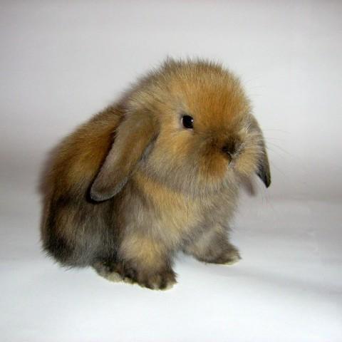 Как правильно устроить кормушки для кроликов