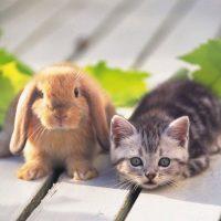 Как купить кролика фото - 14100 200x200