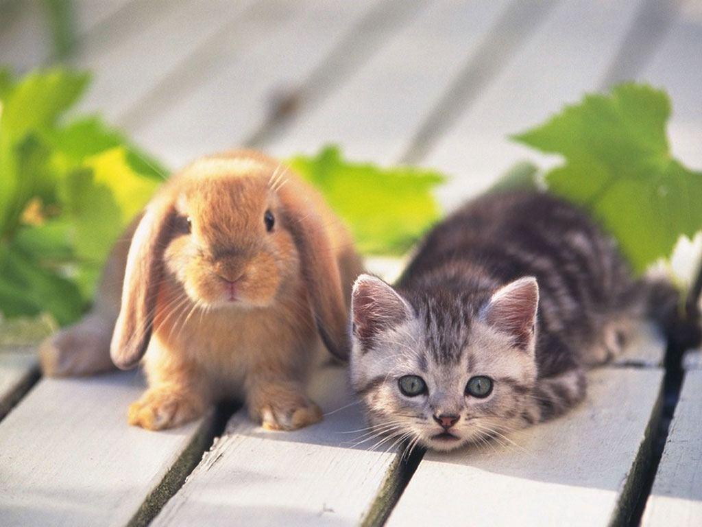 Как купить кролика