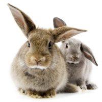 28505 Кормление кролика