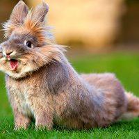 28509 Профилактика болезней и лечение кроликов