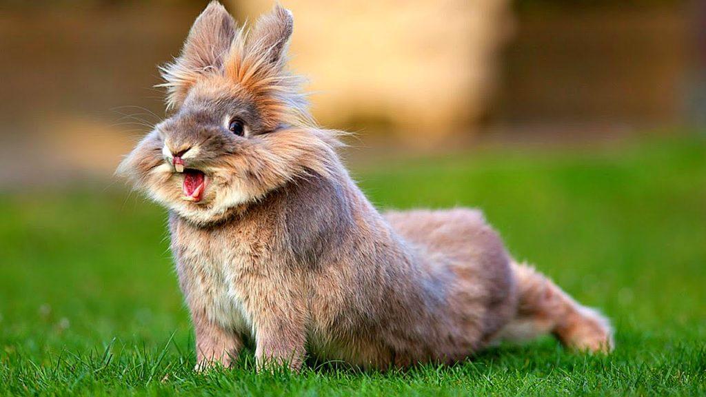 Профилактика болезней и лечение кроликов
