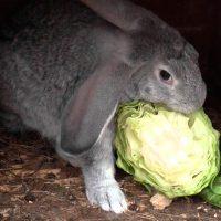 28511 Заготовка кормов для кроликов