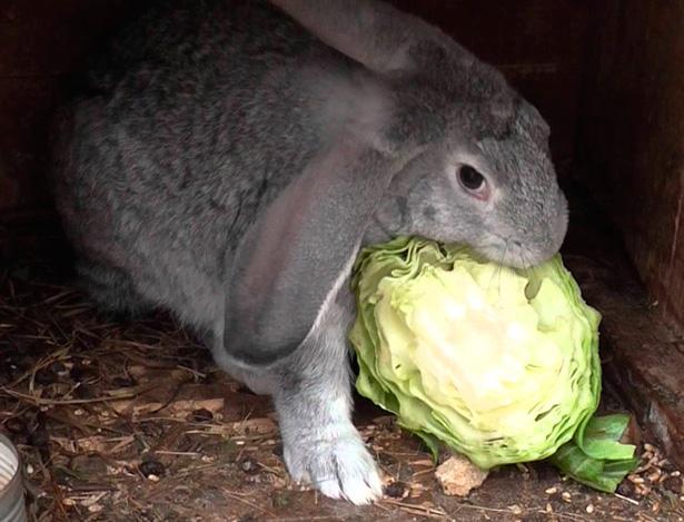 Заготовка кормов для кроликов