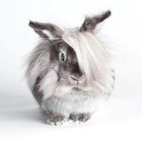 28522 Биология кроликов: особенности развития