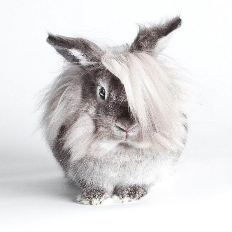 Биология кроликов: особенности развития