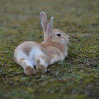 Окрол и подсосный период у крольчихи фото - 14196 200x200
