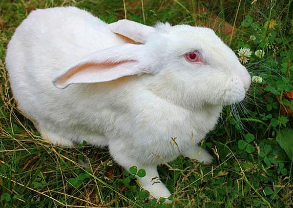 28532 Новые технологии в содержании кроликов