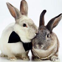 28535 Вольерное разведение кроликов