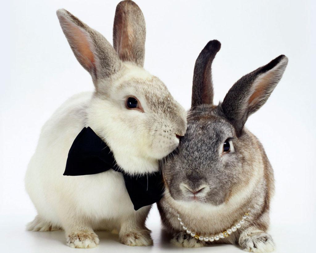 Вольерное разведение кроликов