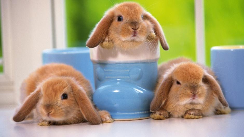 28540 Разведение кроликов в домашних условиях