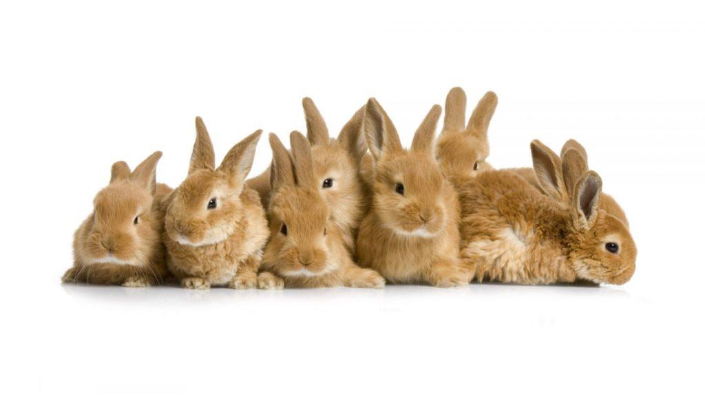 Обзор пород кроликов