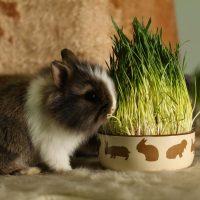 Породы декоративных и карликовых кроликов фото - 14269 200x200