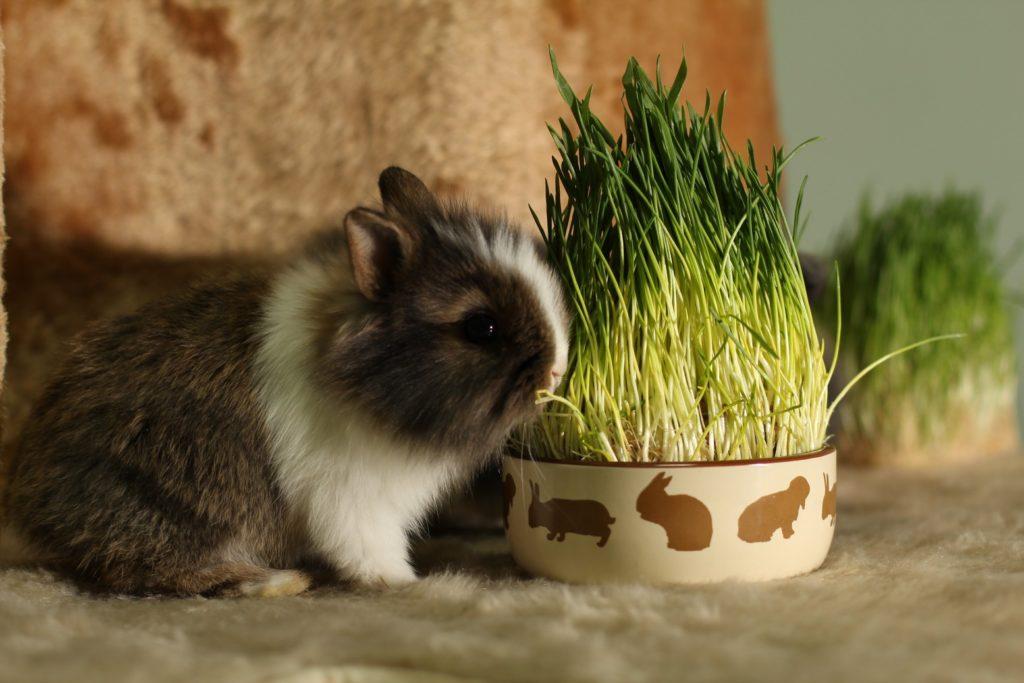 Породы декоративных и карликовых кроликов