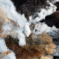 28555 Вычинка шкурок кроликов
