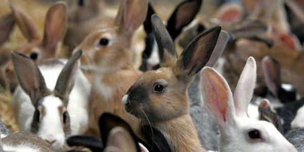 Убой кроликов и съём шкурки