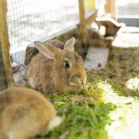 Технологии разведения кроликов фото - 14400 200x200