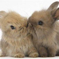 Содержание декоративных кроликов фото - 14403 200x200