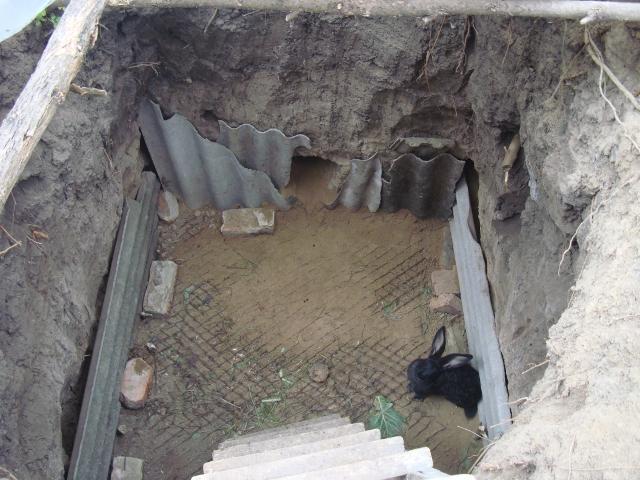 Выращивание кроликов в яме