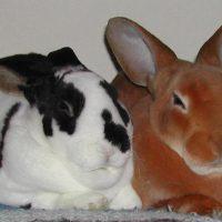 Кролики – акселераты фото - 14409 200x200