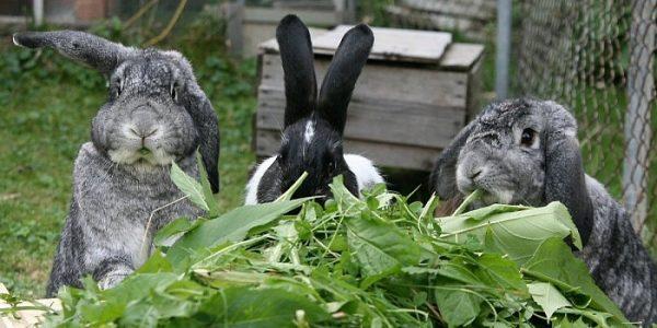 Чем нужно кормить кроликов