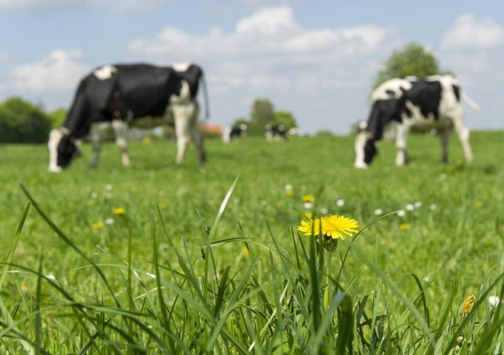 Кормление коров фото - 15164 1024x723