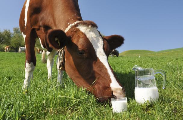 Переработка коровьего молока на ферме