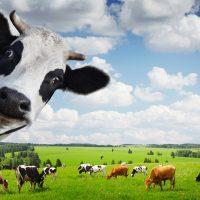 28767 Пищевая ценность кормов для скота