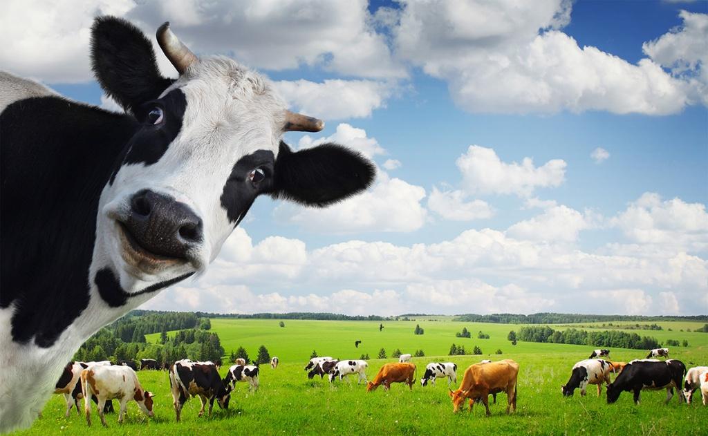Пищевая ценность кормов для скота