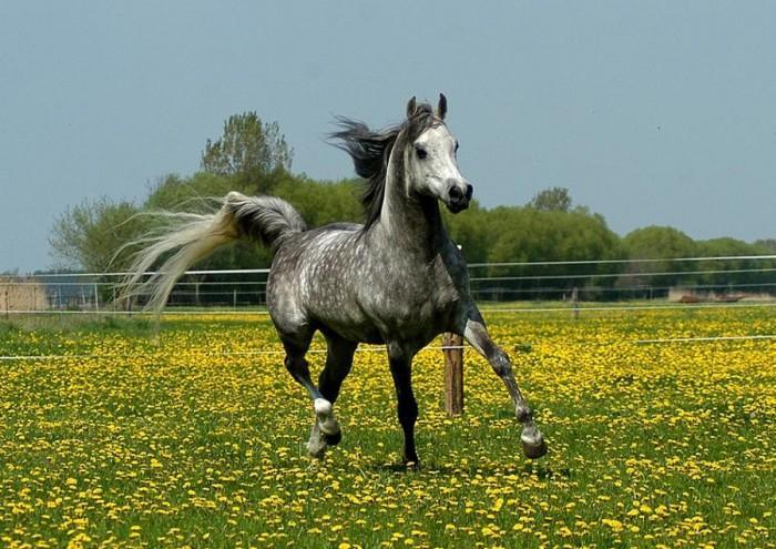 Основные масти и породы лошадей