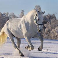 28863 Орловская порода лошадей