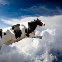 28808 Молочная продуктивность коров: способы планирования