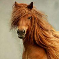 28892 Смешанный способ содержания лошадей