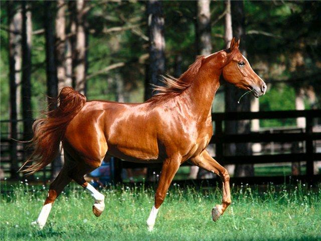 Смешанный способ содержания лошадей